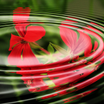 flower and water rings